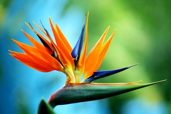 july    echelon florist, Natural flower