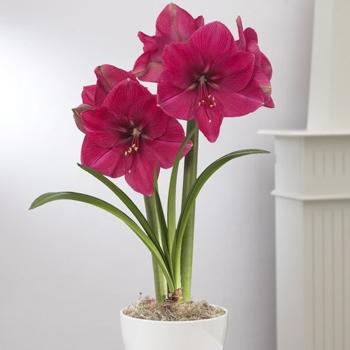 flower  echelon florist, Natural flower